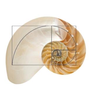 nautilus_shell_spiral